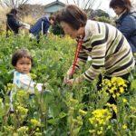 のらぼう菜収穫体験