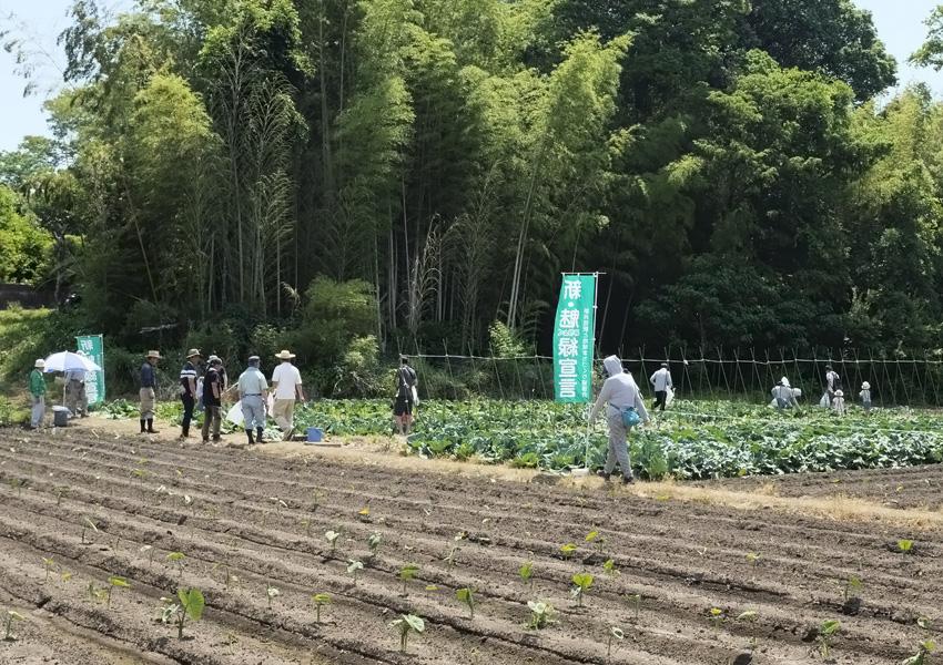 春キャベツ収穫体験
