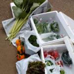 かみね野菜