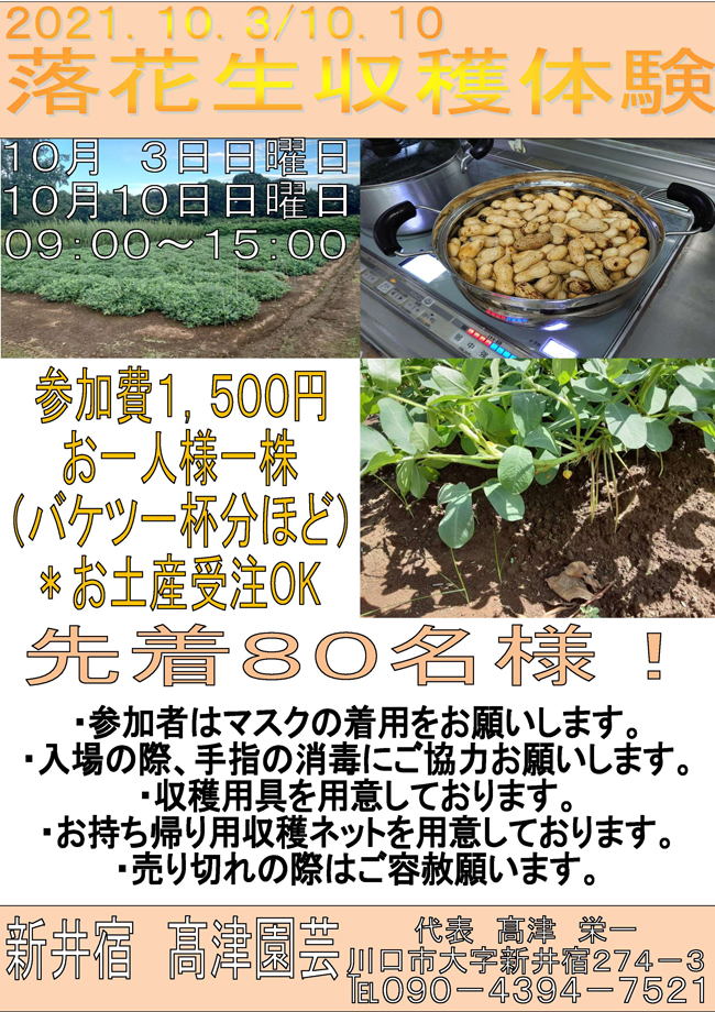 落花生収穫体験2021